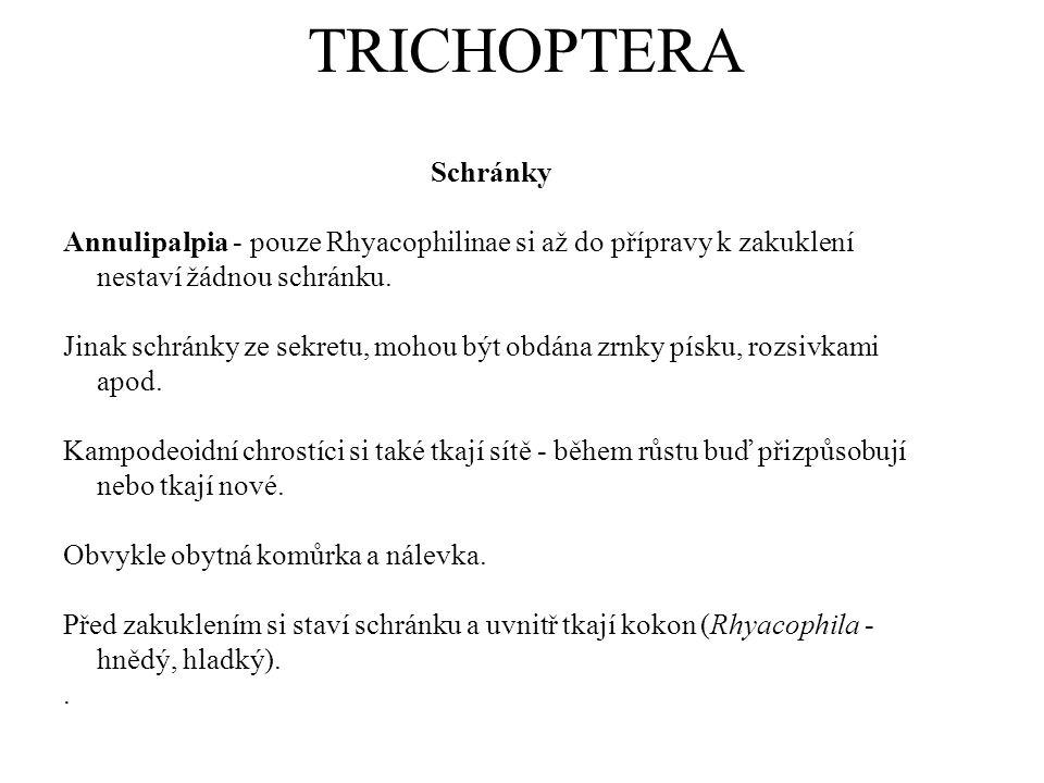 TRICHOPTERA Schránky. Annulipalpia - pouze Rhyacophilinae si až do přípravy k zakuklení nestaví žádnou schránku.