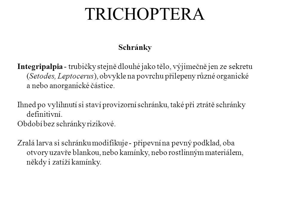 TRICHOPTERA Schránky.