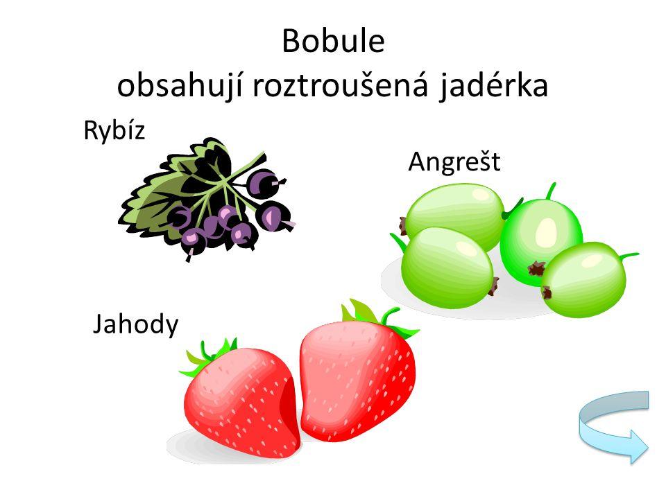Bobule obsahují roztroušená jadérka