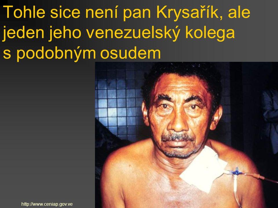 Tohle sice není pan Krysařík, ale jeden jeho venezuelský kolega s podobným osudem