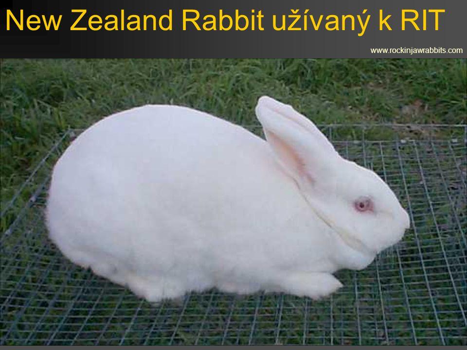 New Zealand Rabbit užívaný k RIT