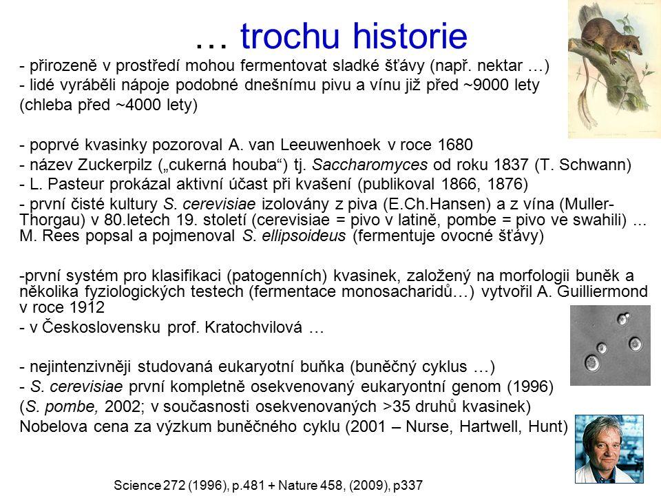… trochu historie přirozeně v prostředí mohou fermentovat sladké šťávy (např. nektar …)