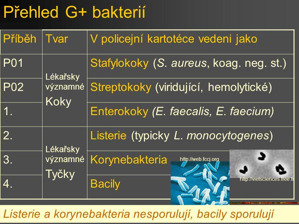 Přehled G+ bakterií Příběh Tvar V policejní kartotéce vedeni jako P01