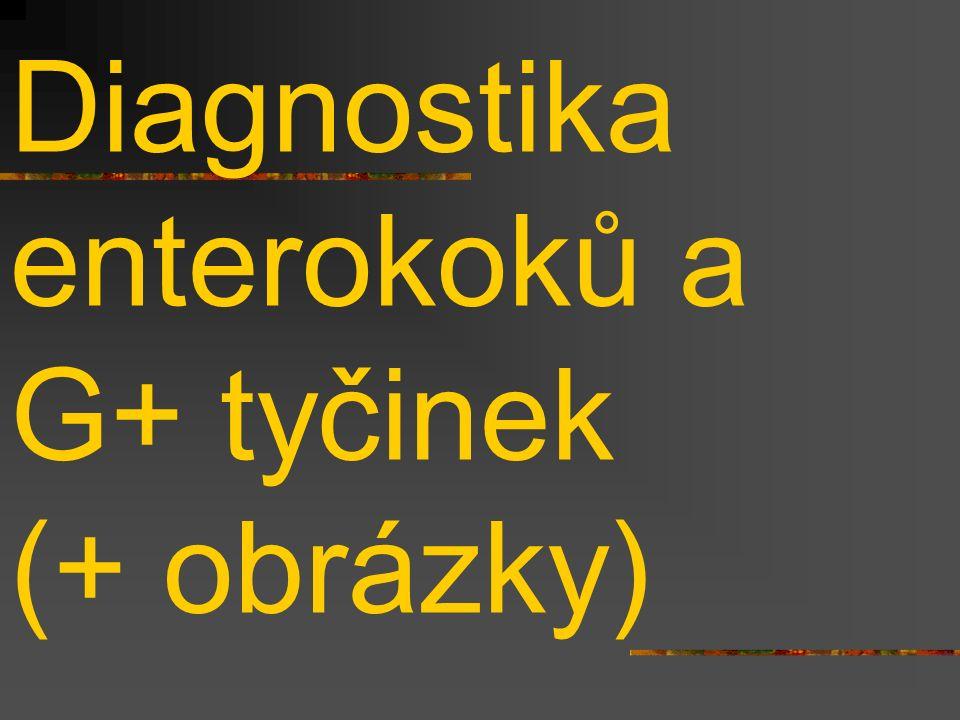 Diagnostika enterokoků a G+ tyčinek (+ obrázky)