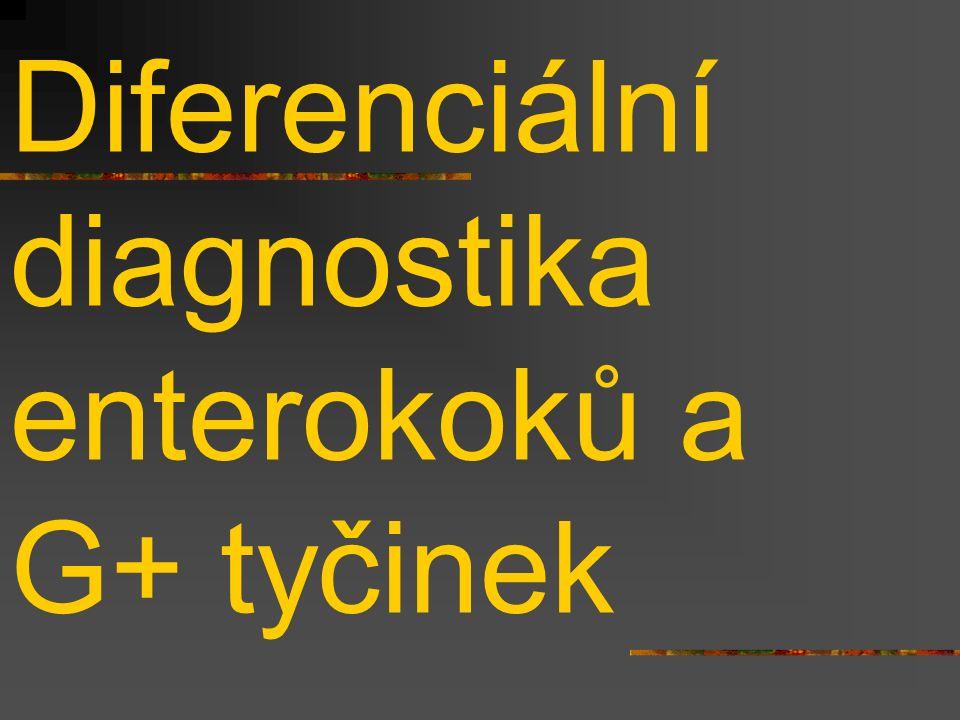 Diferenciální diagnostika enterokoků a G+ tyčinek