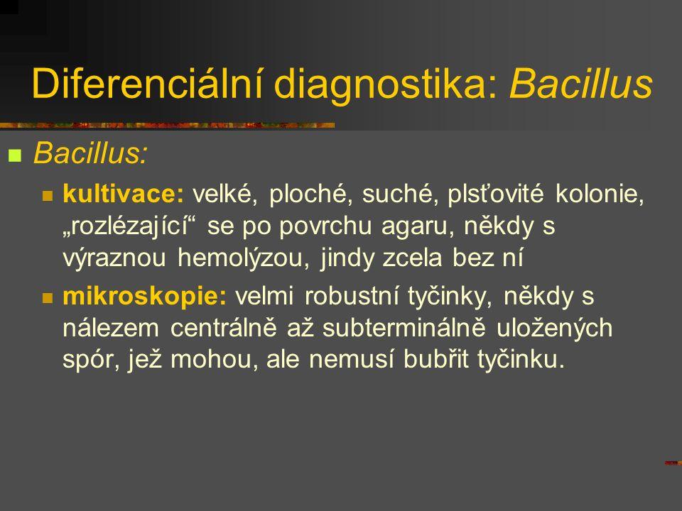 Diferenciální diagnostika: Bacillus