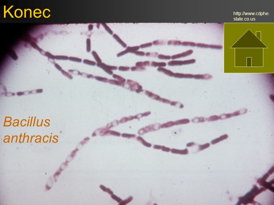 Konec http://www.cdphe.state.co.us Bacillus anthracis