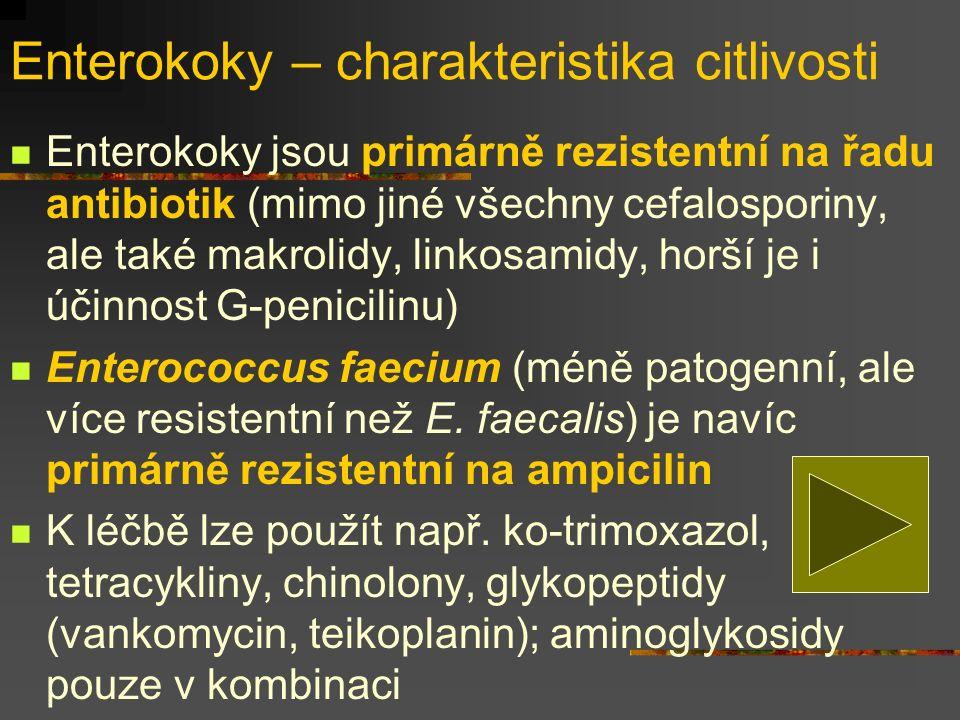 Enterokoky – charakteristika citlivosti