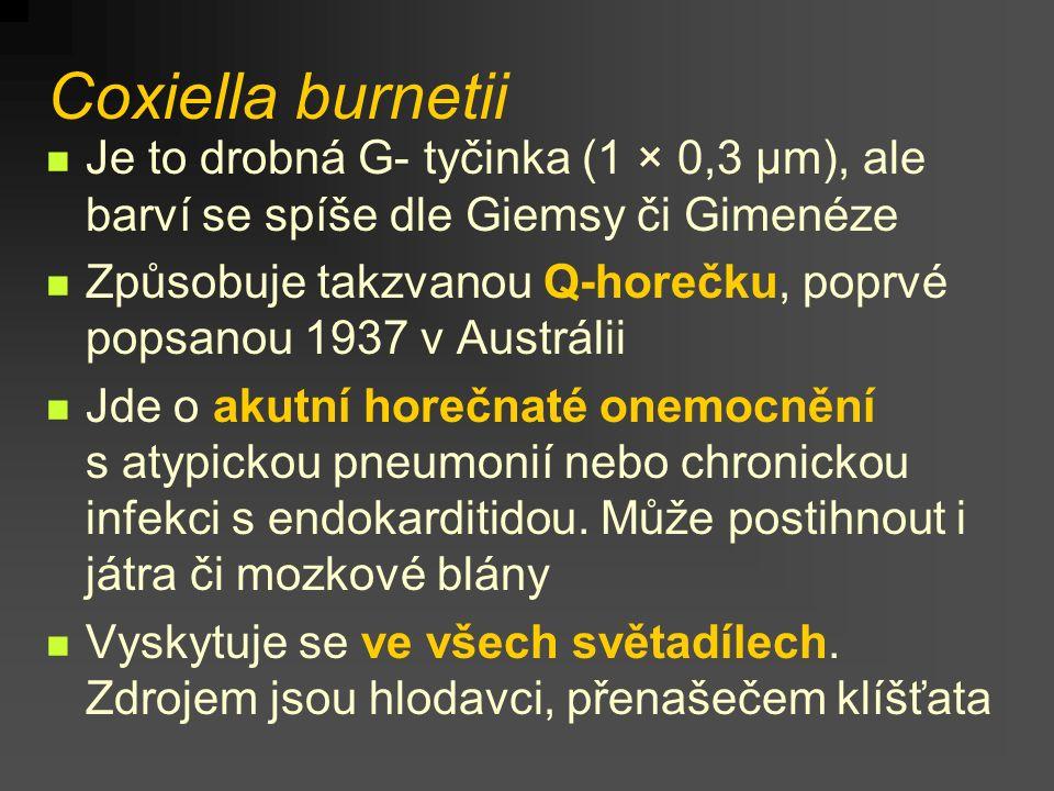 Coxiella burnetii Je to drobná G- tyčinka (1 × 0,3 µm), ale barví se spíše dle Giemsy či Gimenéze.
