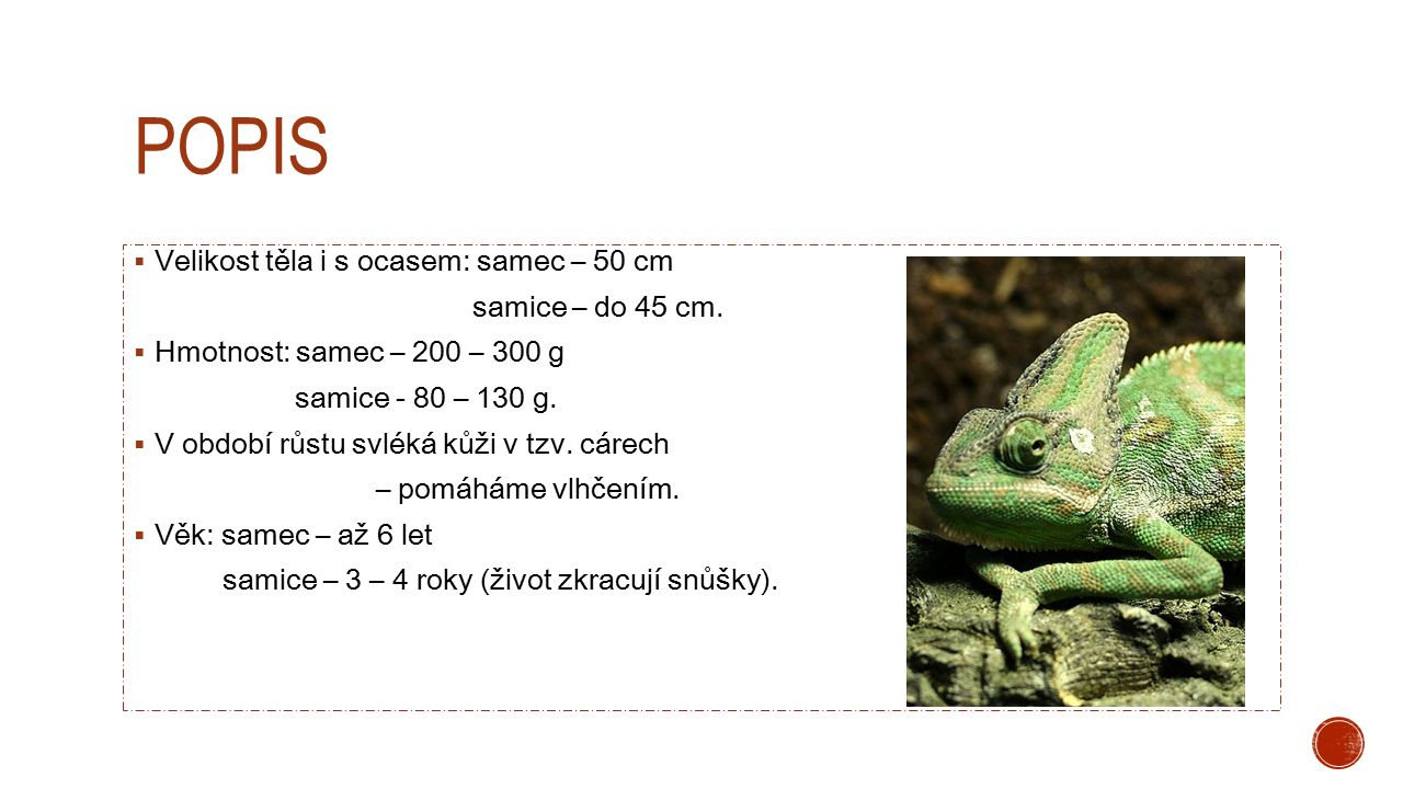popis Velikost těla i s ocasem: samec – 50 cm samice – do 45 cm.