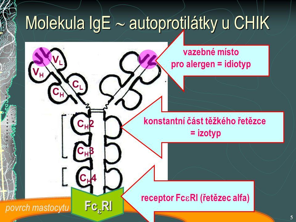 Molekula IgE  autoprotilátky u CHIK