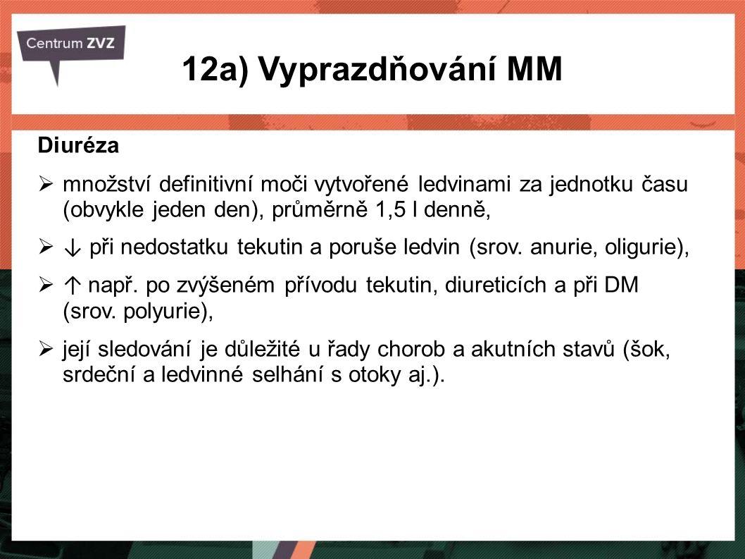 12a) Vyprazdňování MM Diuréza
