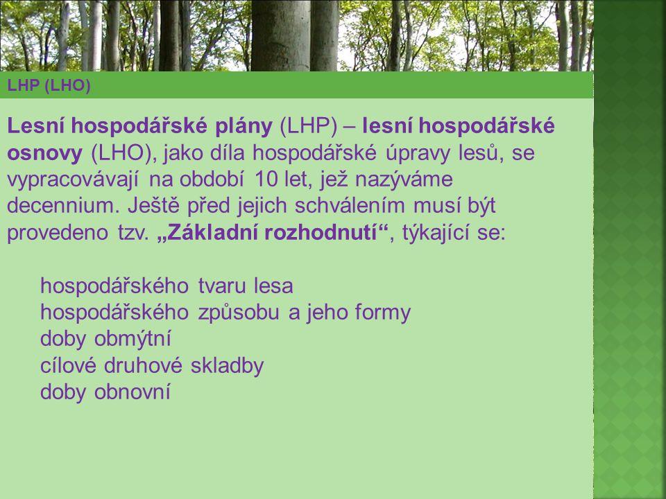hospodářského tvaru lesa hospodářského způsobu a jeho formy