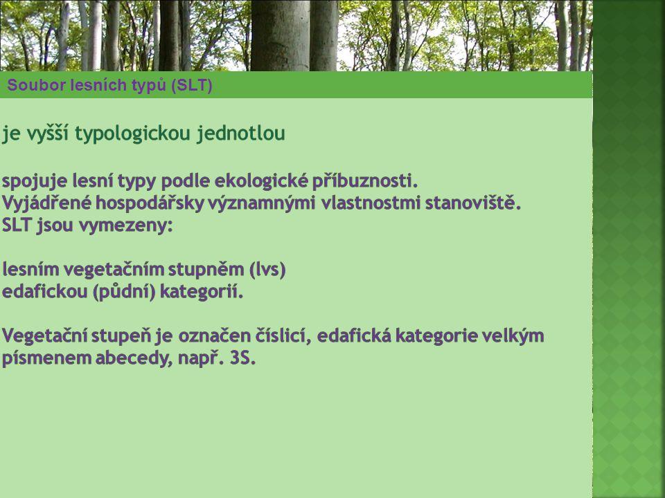 je vyšší typologickou jednotlou spojuje lesní typy podle ekologické příbuznosti. Vyjádřené hospodářsky významnými vlastnostmi stanoviště. SLT jsou vymezeny: lesním vegetačním stupněm (lvs) edafickou (půdní) kategorií. Vegetační stupeň je označen číslicí, edafická kategorie velkým písmenem abecedy, např. 3S.