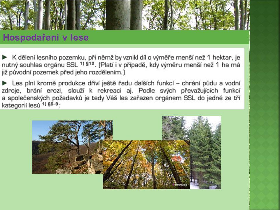Hospodaření v lese
