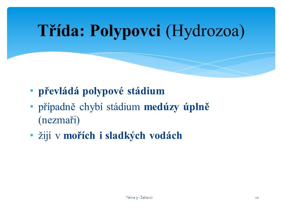 Třída: Polypovci (Hydrozoa)