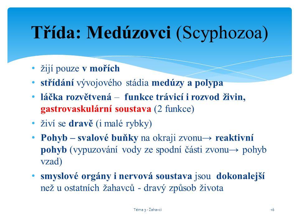 Třída: Medúzovci (Scyphozoa)