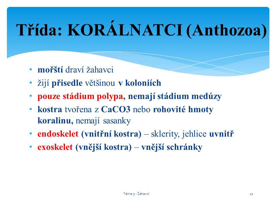 Třída: KORÁLNATCI (Anthozoa)