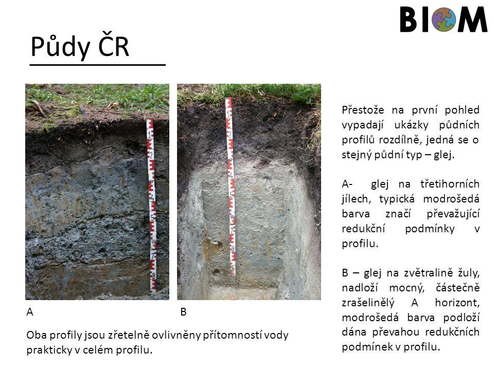 Půdy ČR Přestože na první pohled vypadají ukázky půdních profilů rozdílně, jedná se o stejný půdní typ – glej.