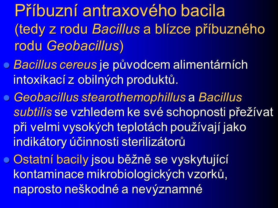 Příbuzní antraxového bacila (tedy z rodu Bacillus a blízce příbuzného rodu Geobacillus)