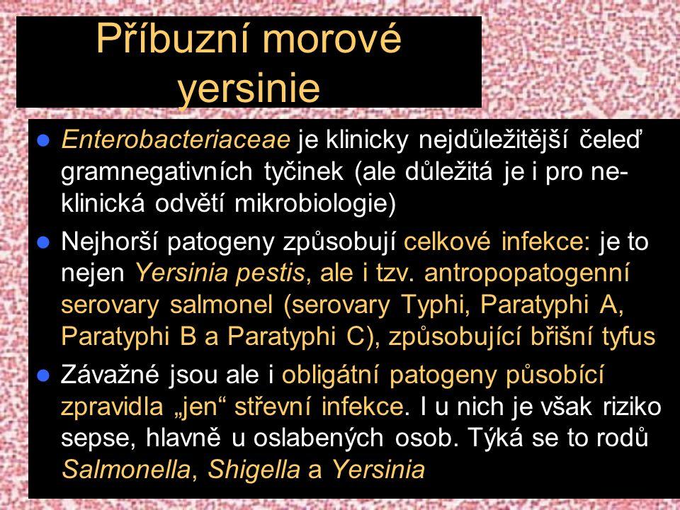 Příbuzní morové yersinie