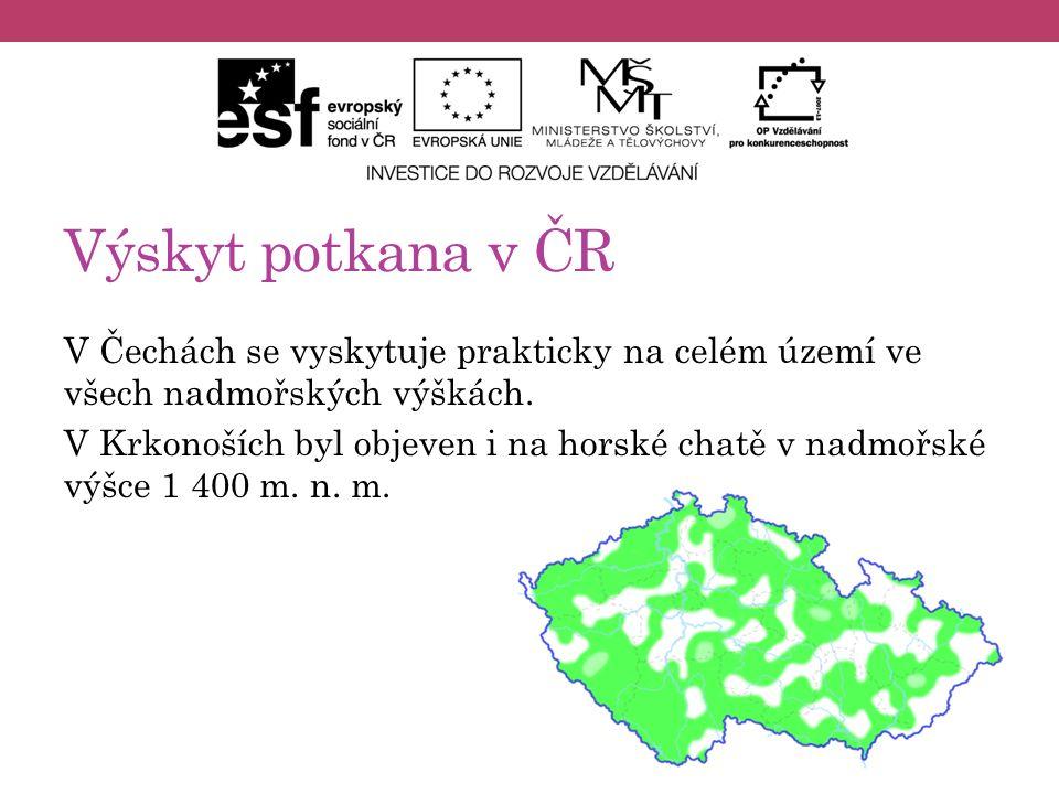 Výskyt potkana v ČR