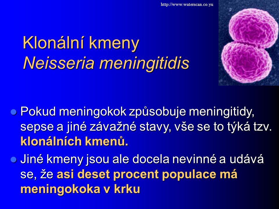 Klonální kmeny Neisseria meningitidis