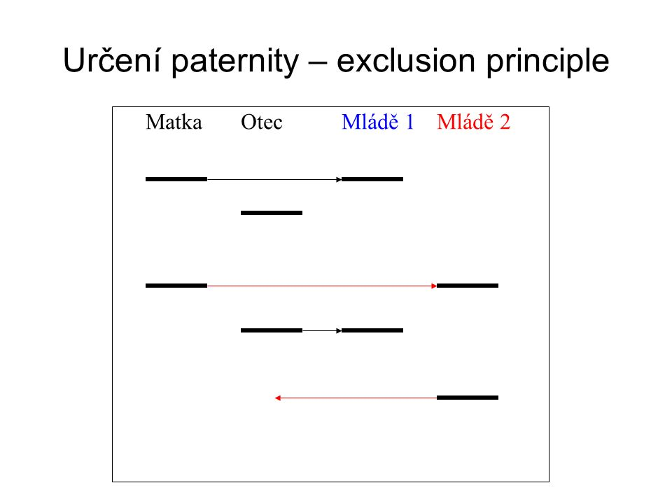 Určení paternity – exclusion principle
