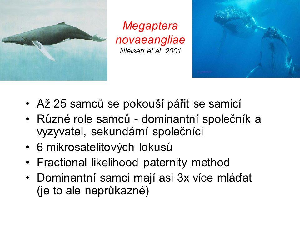 Megaptera novaeangliae Nielsen et al. 2001