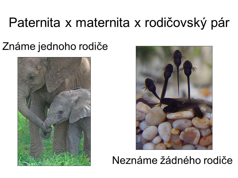 Paternita x maternita x rodičovský pár