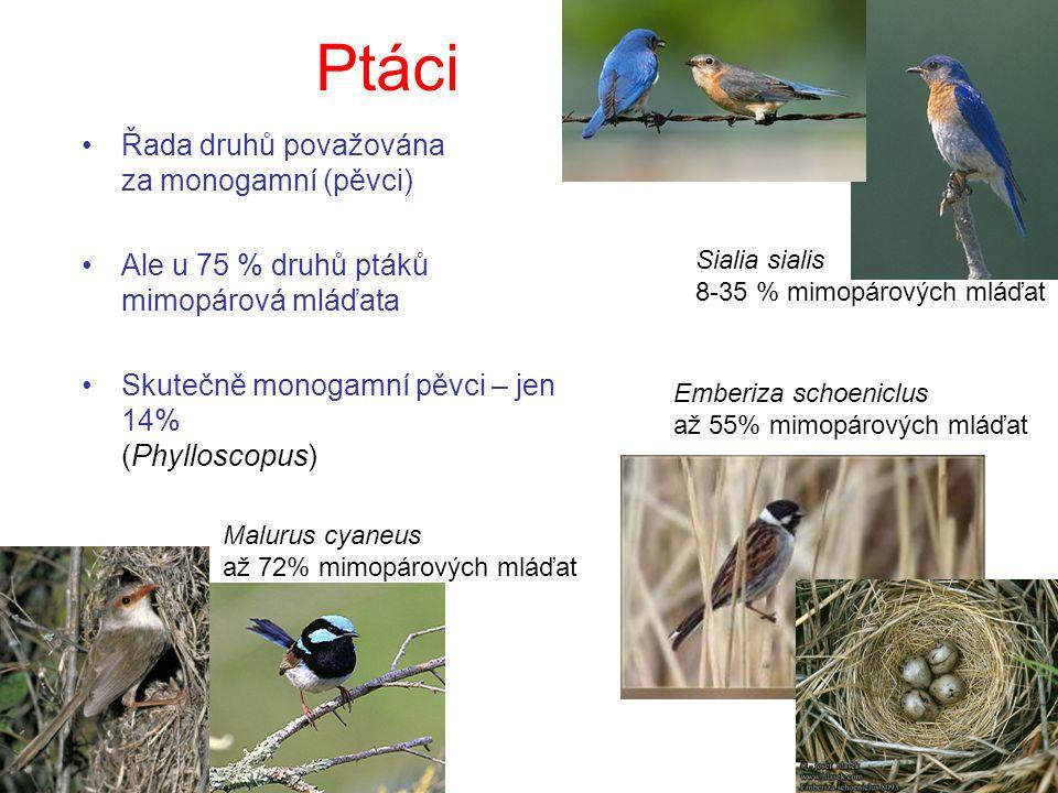 Ptáci Řada druhů považována za monogamní (pěvci)