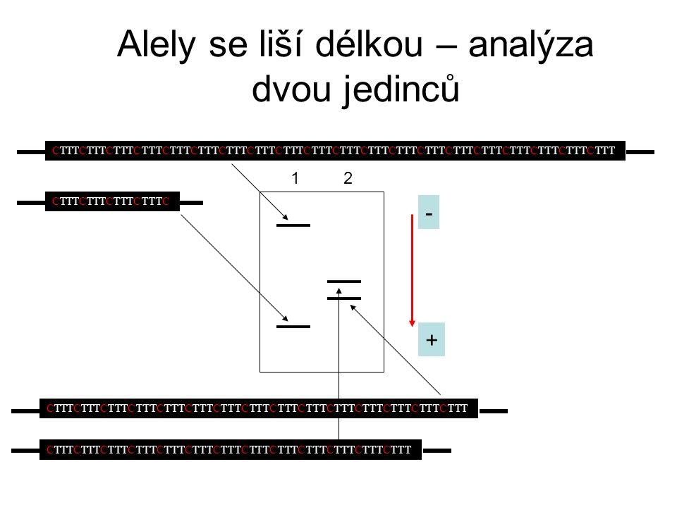 Alely se liší délkou – analýza dvou jedinců