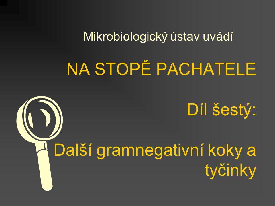 NA STOPĚ PACHATELE Díl šestý: Další gramnegativní koky a tyčinky