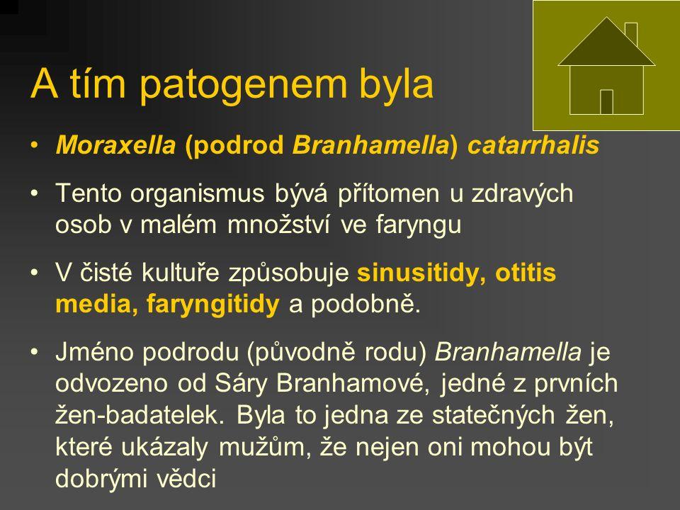 A tím patogenem byla Moraxella (podrod Branhamella) catarrhalis