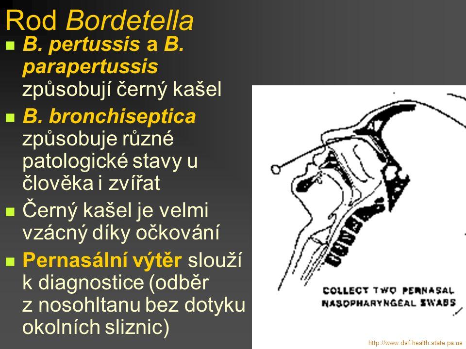 Rod Bordetella B. pertussis a B. parapertussis způsobují černý kašel