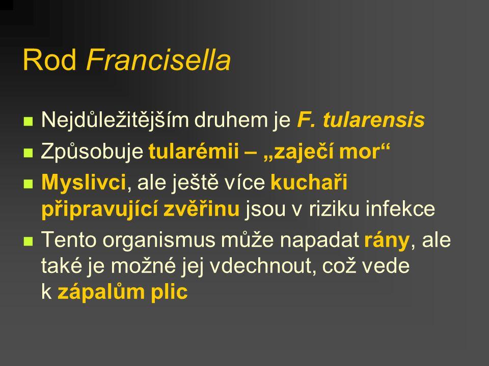 Rod Francisella Nejdůležitějším druhem je F. tularensis