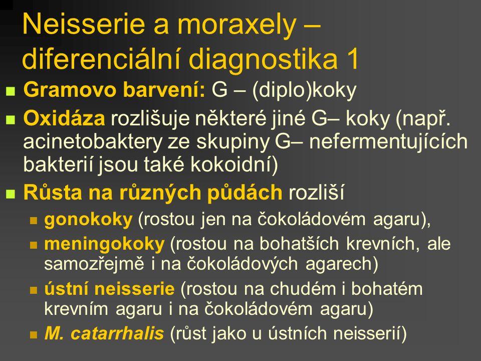Neisserie a moraxely – diferenciální diagnostika 1