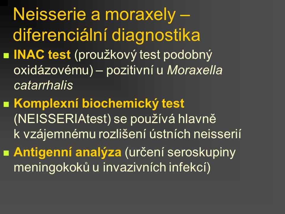 Neisserie a moraxely – diferenciální diagnostika