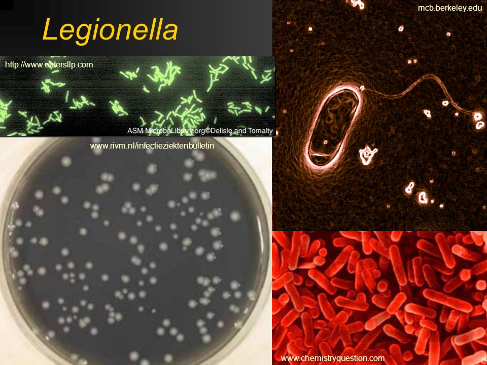 Legionella mcb.berkeley.edu http://www.eldersllp.com