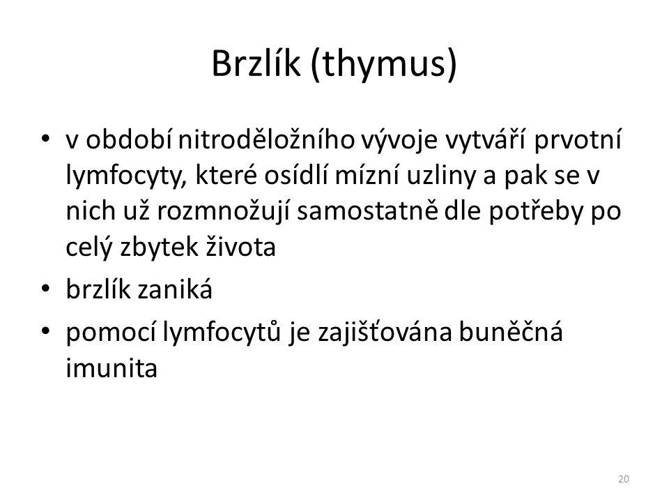 Brzlík (thymus)