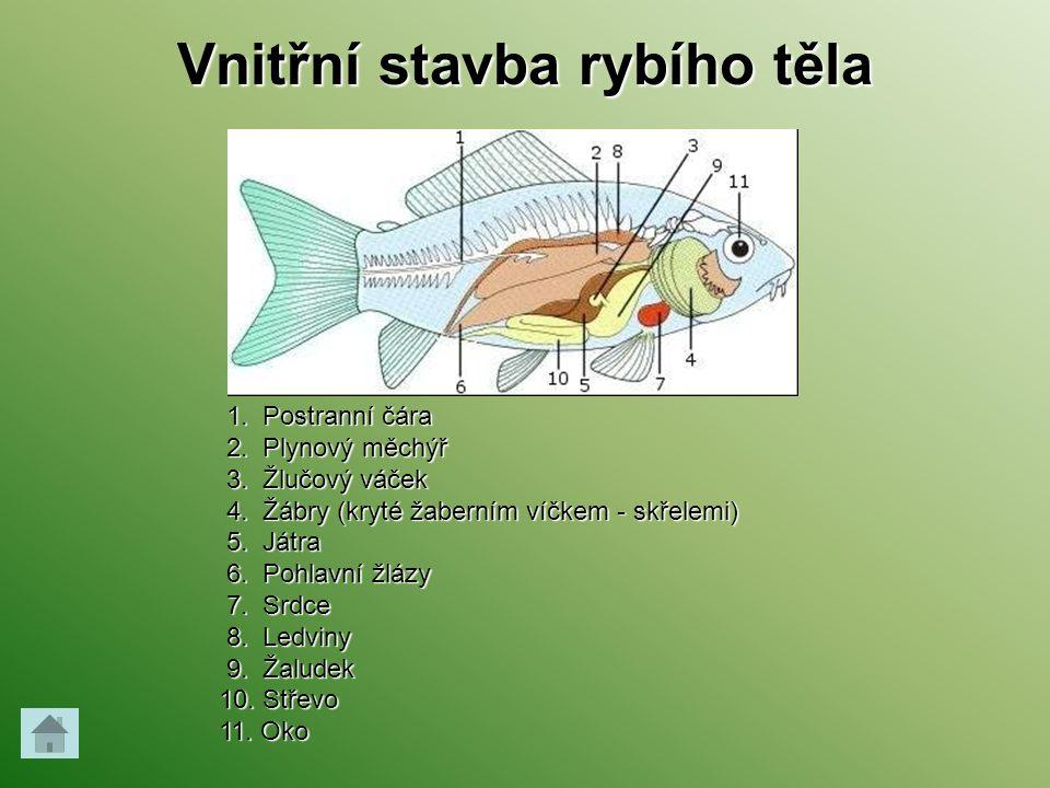 Vnitřní stavba rybího těla