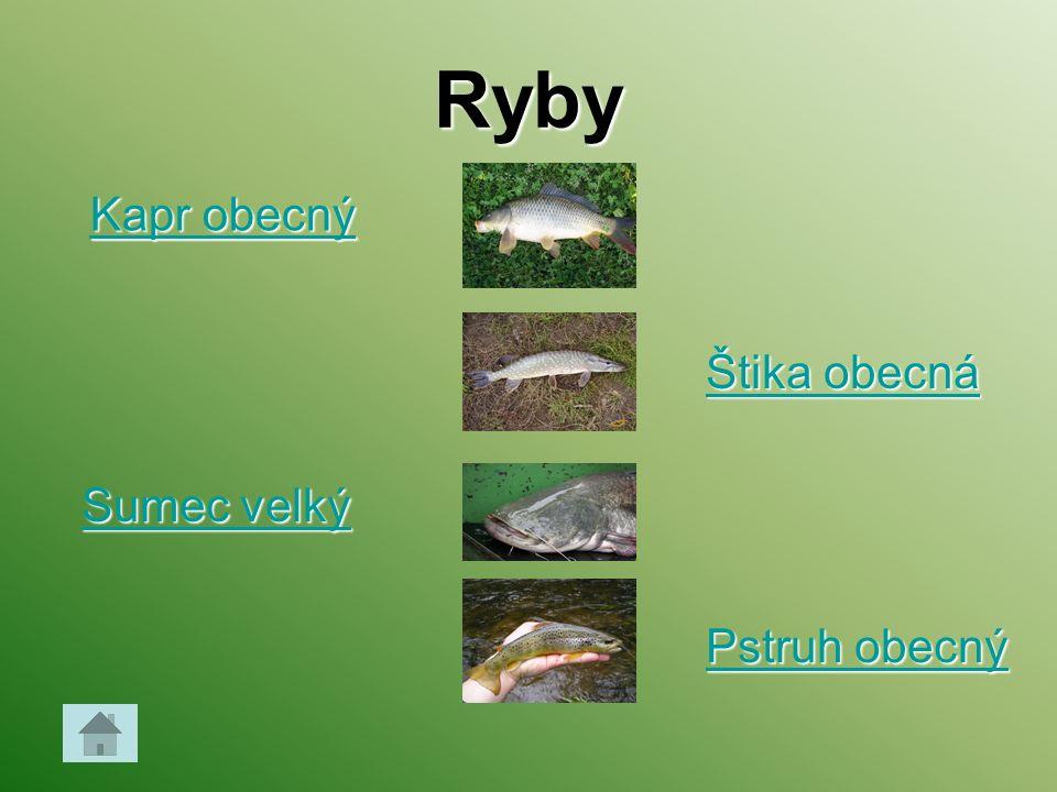 Ryby Kapr obecný Štika obecná Sumec velký Pstruh obecný