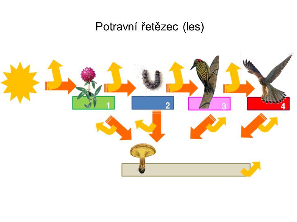 Potravní řetězec (les)