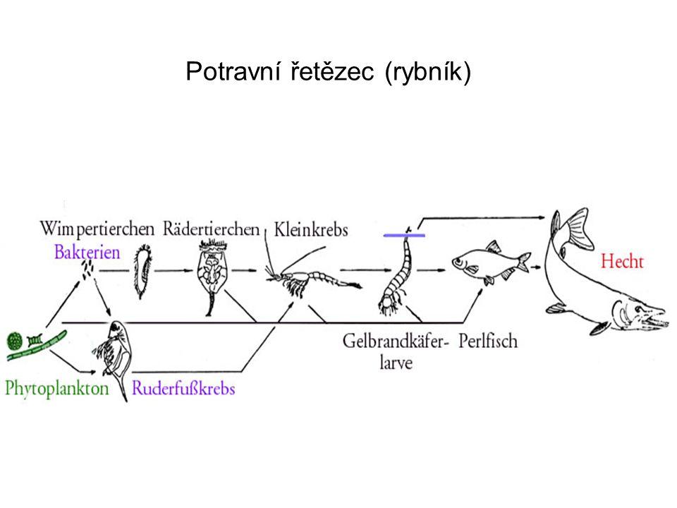 Potravní řetězec (rybník)