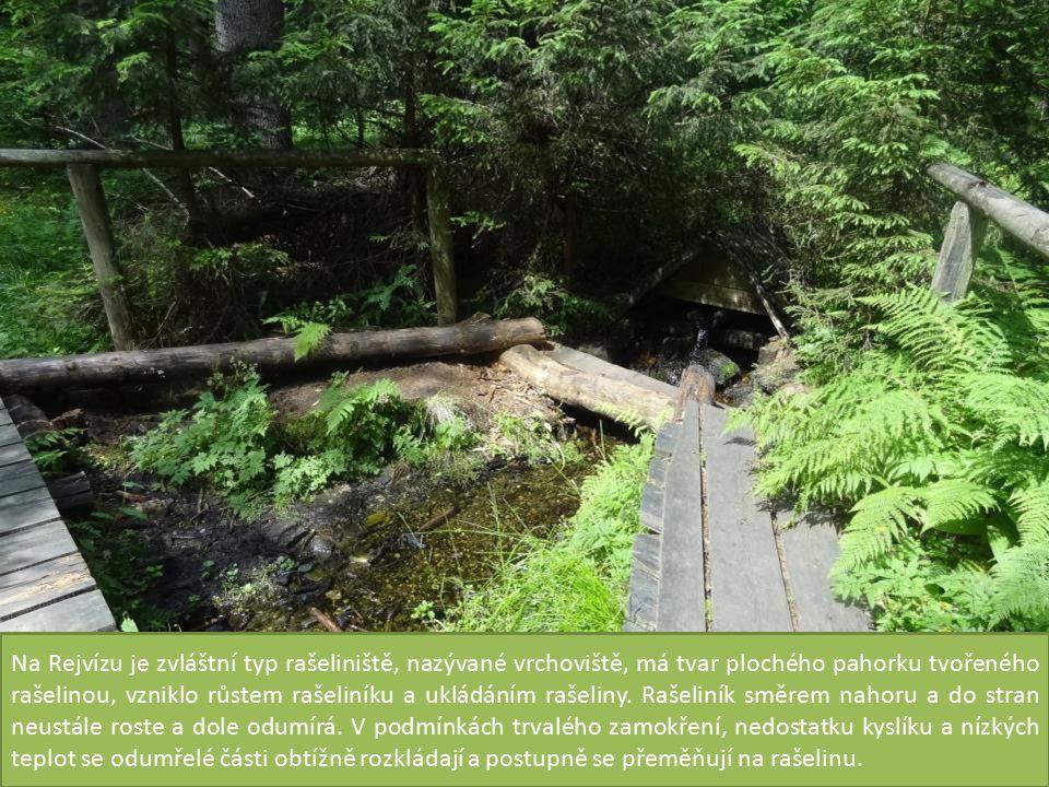 Na Rejvízu je zvláštní typ rašeliniště, nazývané vrchoviště, má tvar plochého pahorku tvořeného rašelinou, vzniklo růstem rašeliníku a ukládáním rašeliny.