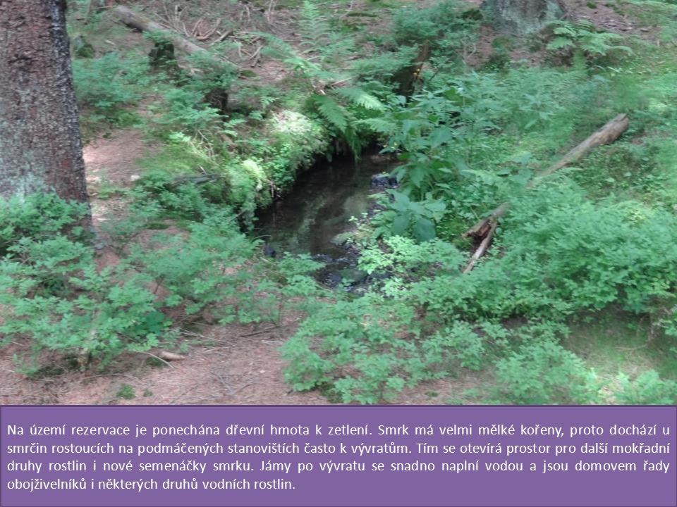 Na území rezervace je ponechána dřevní hmota k zetlení