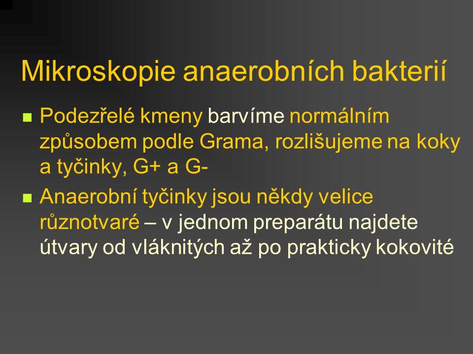 Mikroskopie anaerobních bakterií