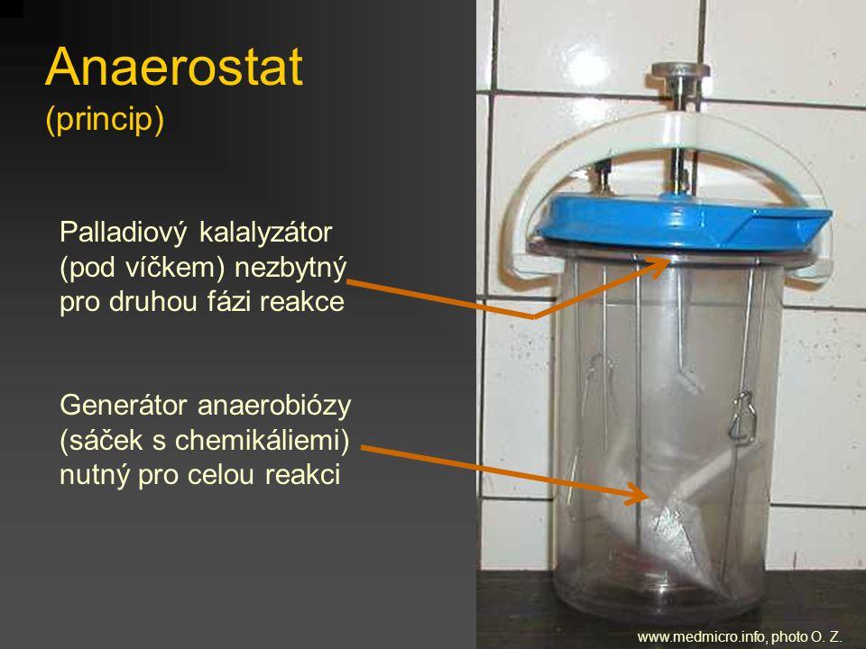 www.medmicro.info, photo O. Z.