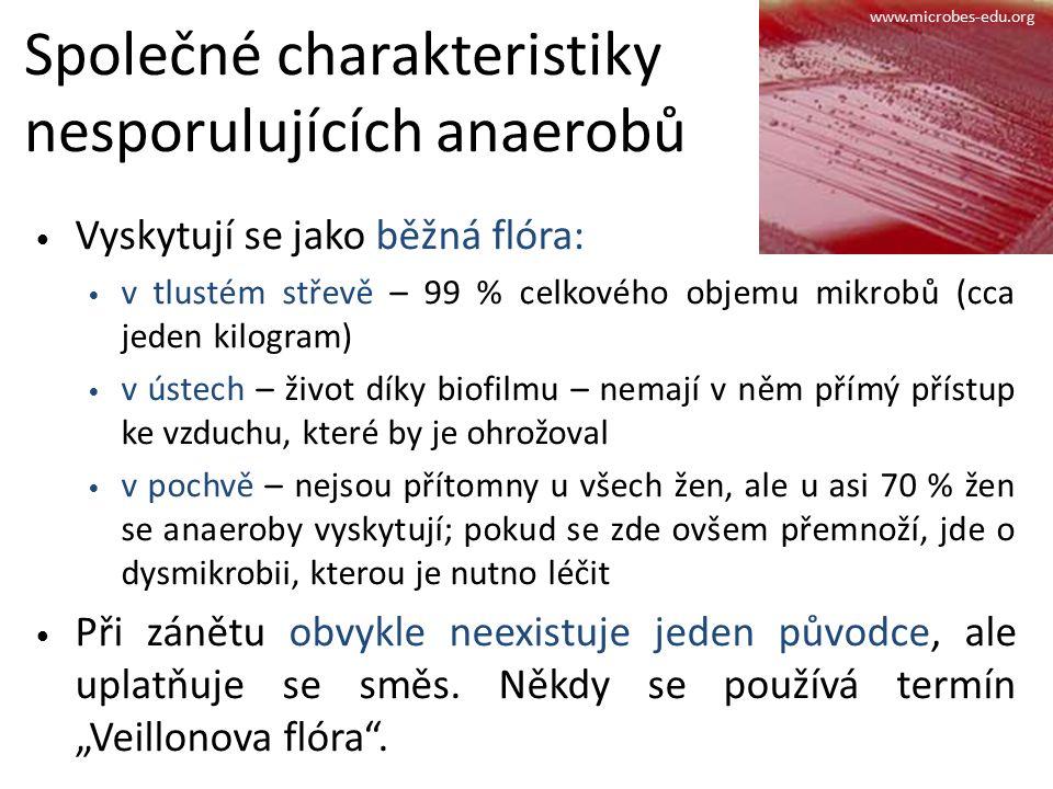 Společné charakteristiky nesporulujících anaerobů