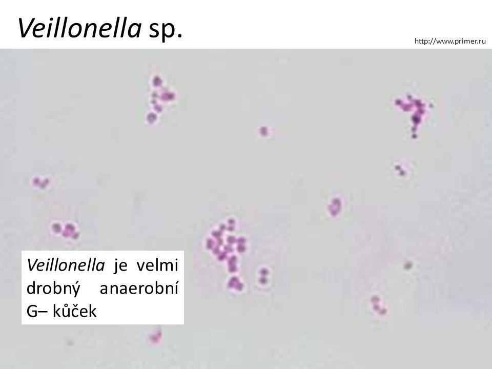 Veillonella sp. Veillonella je velmi drobný anaerobní G– kůček